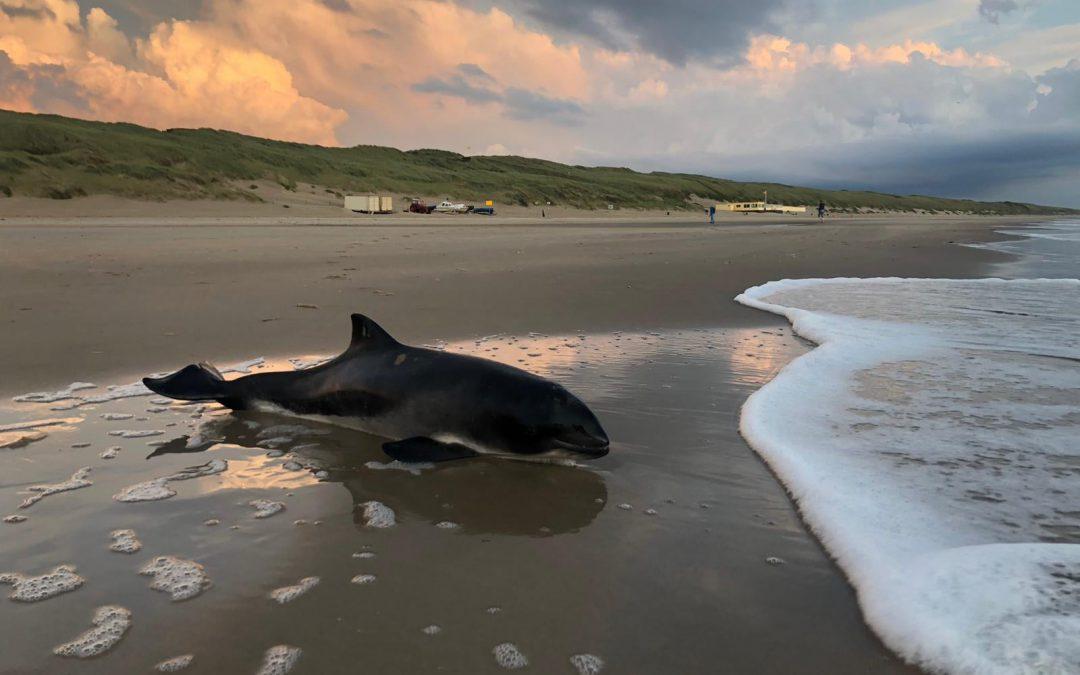 Stichting SOS Dolfijn